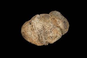 Sloth Dung, Alternate View