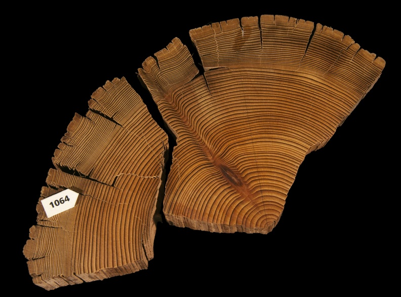 Tree-ring Sample