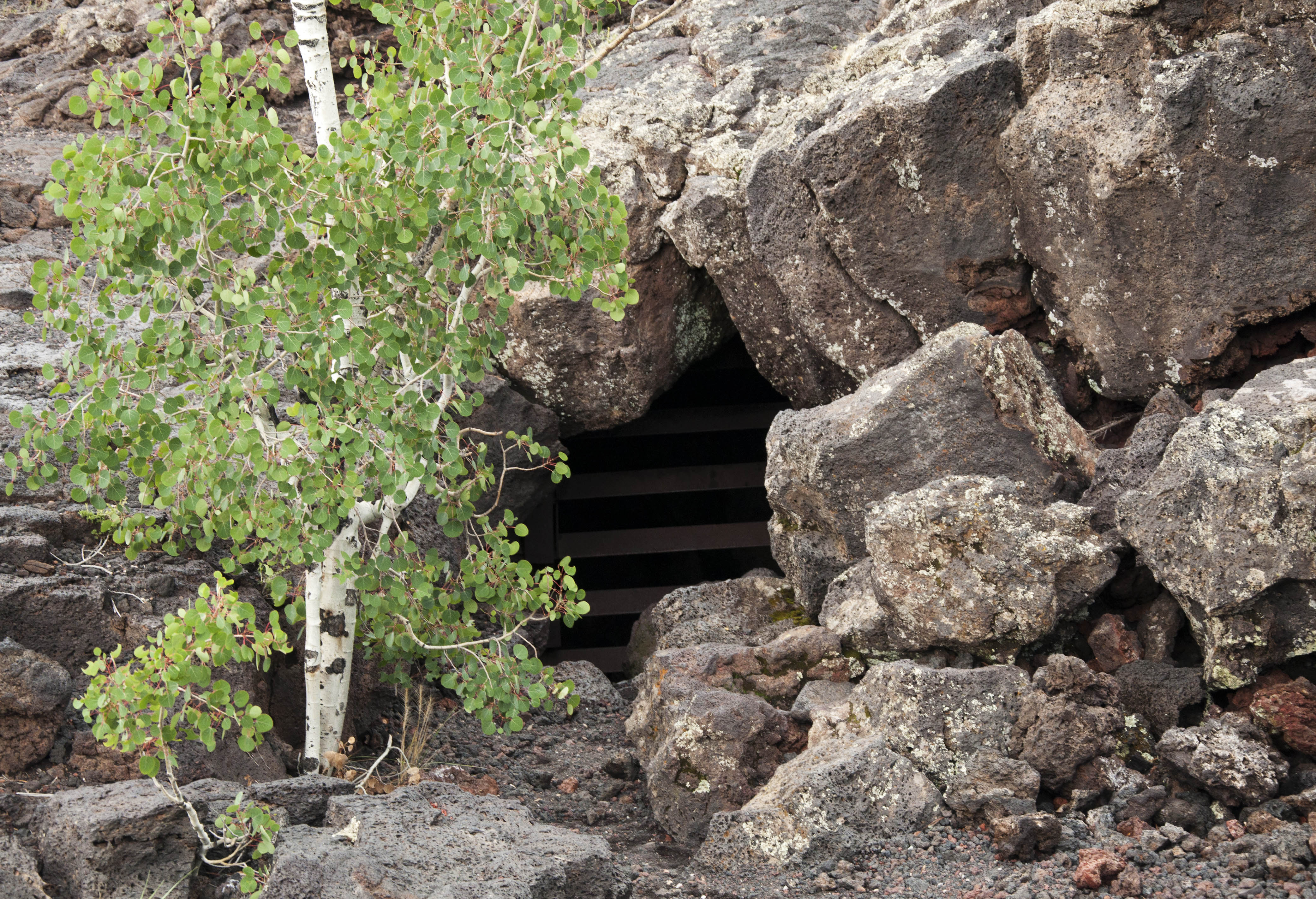 Opening to lava tube, now sealed for safety