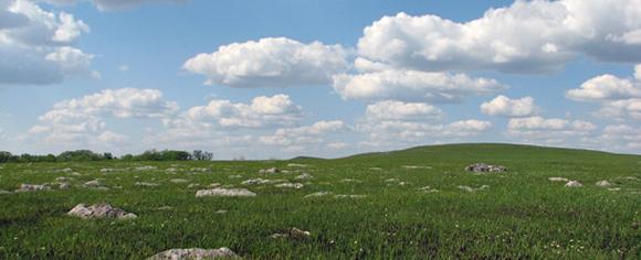 Tallgrass prairie.