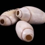 Olivella shell beads