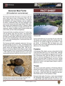 Sonoran Mud Turtle fact sheet