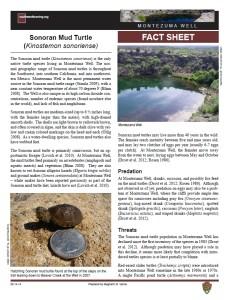 Sonoran Mud Turtle fact sheet