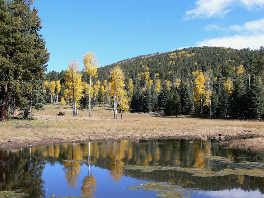 Pond at Bandelier National Monument