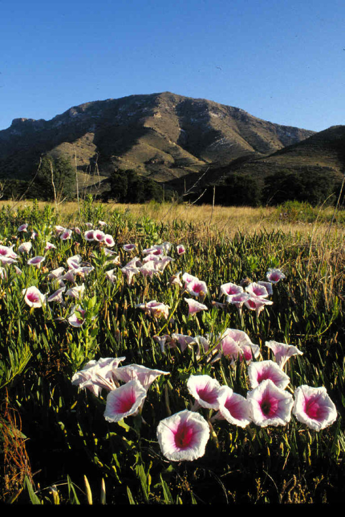 Coronado National Monument. Photo Credit: National Park Service. Click the image to open the Coronado National Monument gallery.