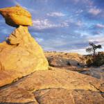 Sandstone bedrock expanse on the Colorado Plateau
