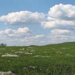 Prairie grass, Kansas