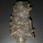 Serrated Gypsum point