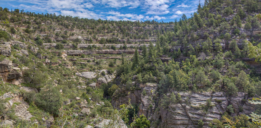 Vegetation in Walnut Canyon includes cacti, juniper and pinyon, pine, and riparian species