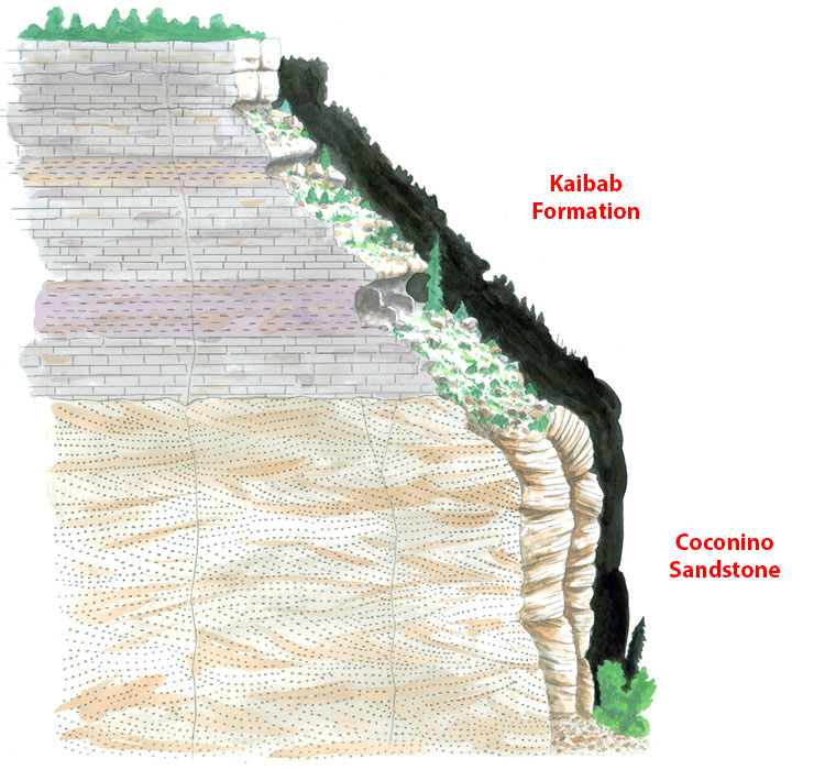 Geologic cross-section of Walnut Canyon, Kaibab Formation limestone above, Coconino Sandstone below